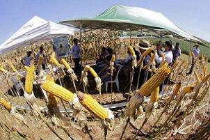 UniCesumar realiza a partir desta sexta-feira o XVI Dia de Campo de Agrárias