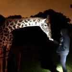 visita ao Zoológico (12)